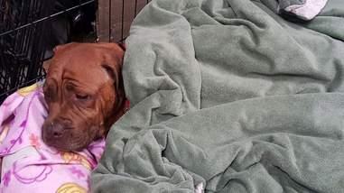 Terrified breeder dog dumped at kill shelter