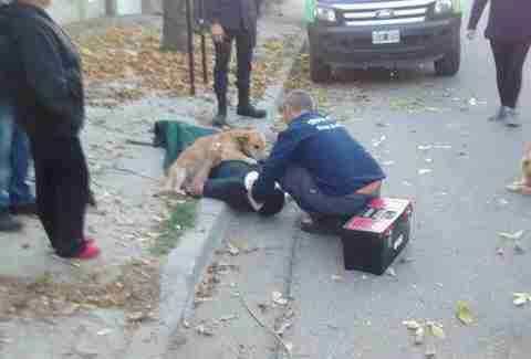 dog comforts owner injured in fall