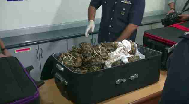 Suitcase containing smuggled tortoises