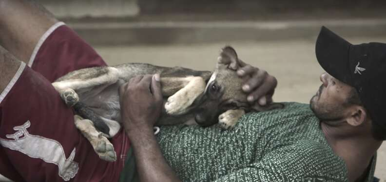 homeless man with dogs