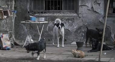 street dogs in brazil