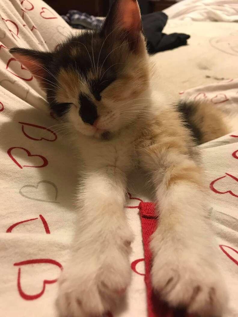 Kitten sleeping in her new home