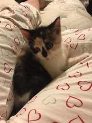 Woman brings stray kitten home