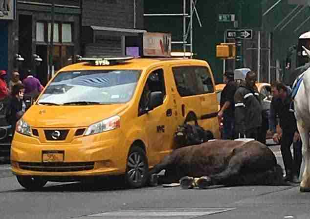 Fallen horse in New York City