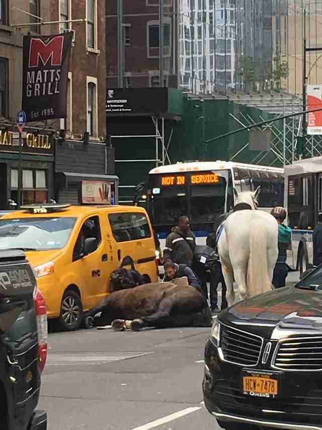 Injured horse in Manhattan
