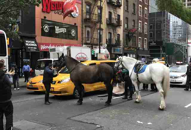 Horses in New York City