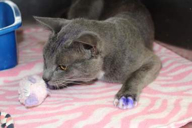 Rescued cat with purple paws