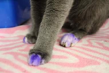 A cat's purple paws