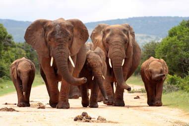 Ando Elephant National Park, South Africa