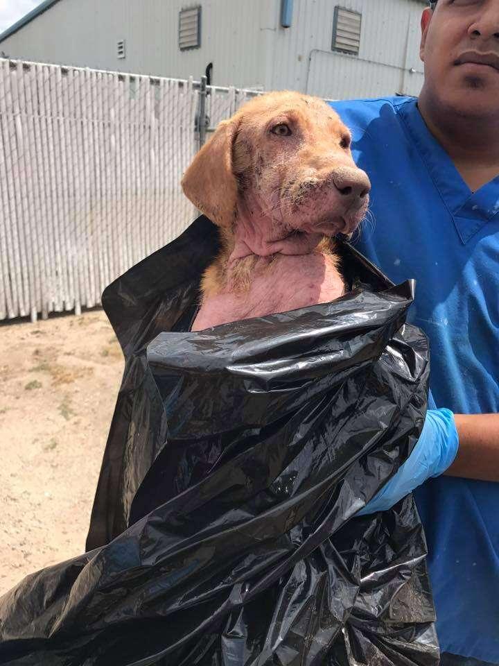 Dog surrendered in plastic garbage bag