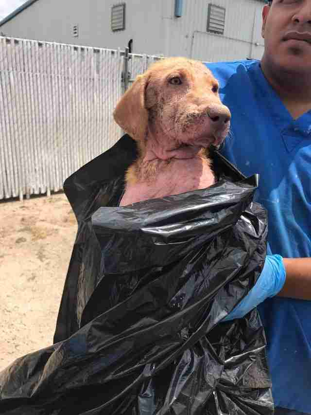 Dog surrendered in plastic garbage bag