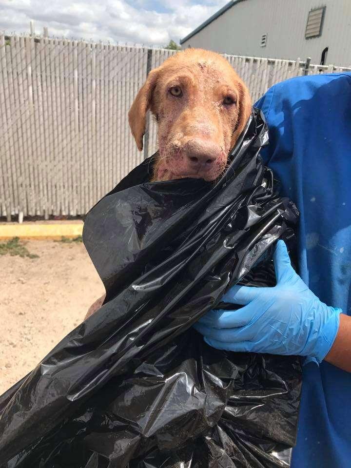 Dog surrendered in plastic bag