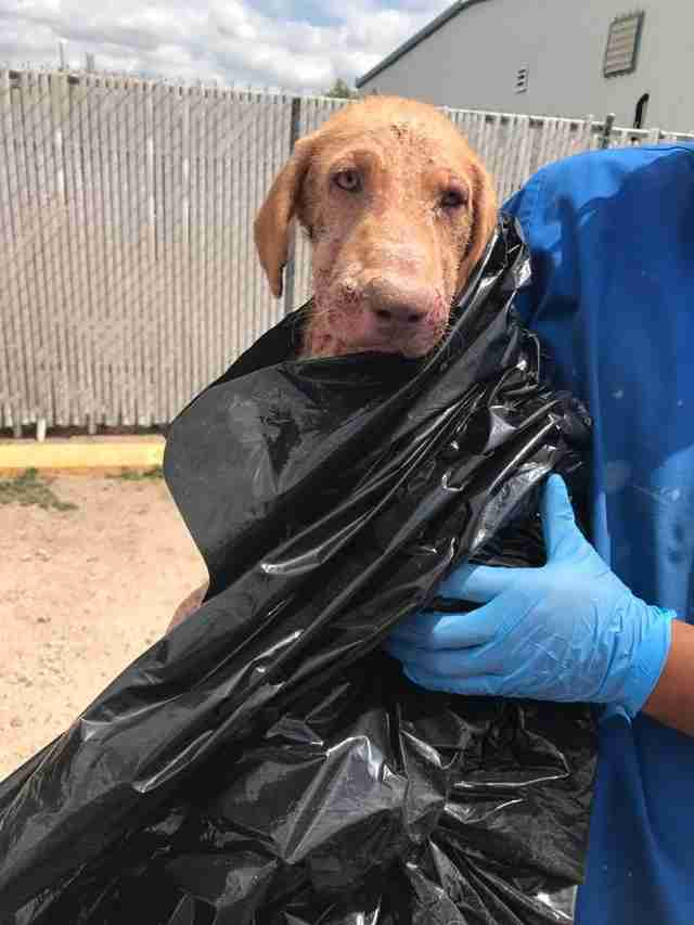 Dog surrendered in plastic bag