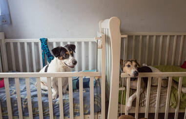 Dogs in crib