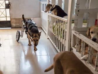Dog sanctuary