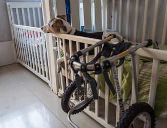 Dog in crib