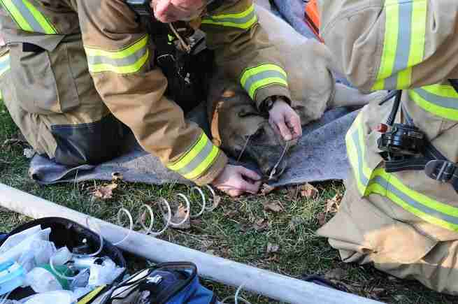 dog finds cat after fire