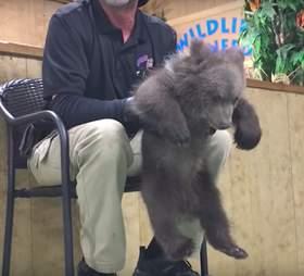 Tim Stark roughly handling a bear cub