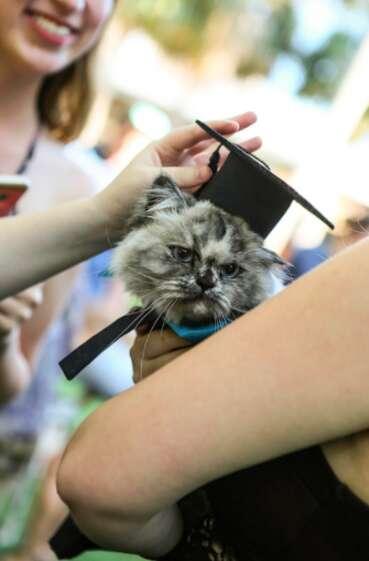 cat graduates from Eckerd College
