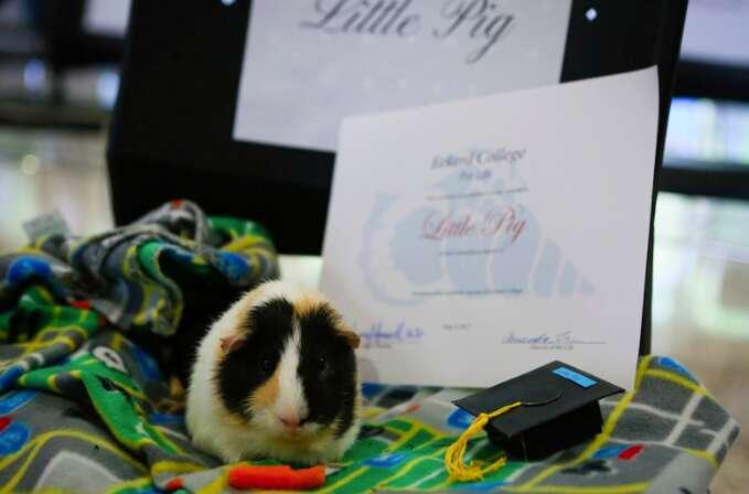 guinea pig graduates from Eckerd College