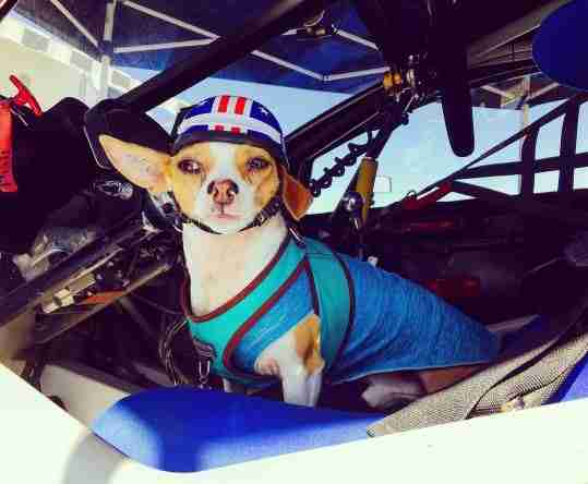 pit dog pete in race car