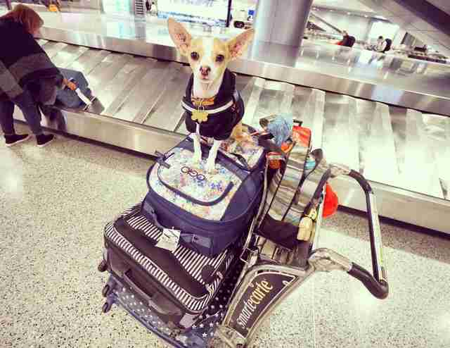 dog standing on top of luggage