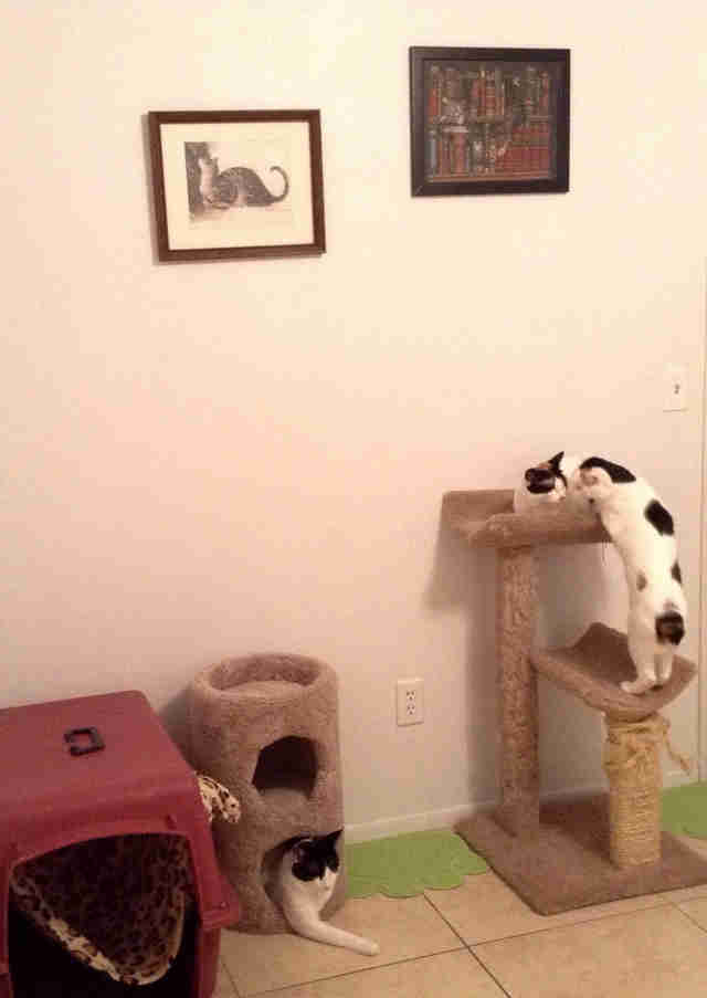 Kittens playing in cat houses