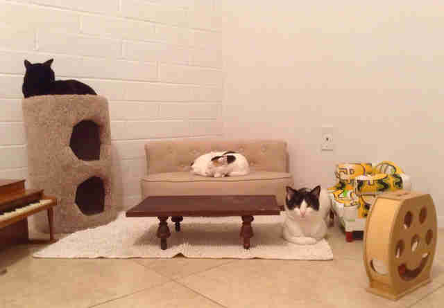 Cats hanging out in a cat-sized living room