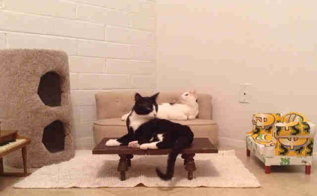 Cats in cat-sized living room