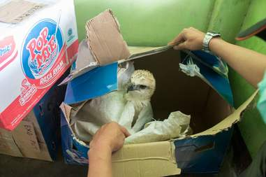 Eagle inside cardboard box