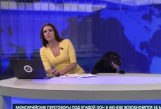 Watch This Excited Dog Try to Take Over in the Middle of a Newscast