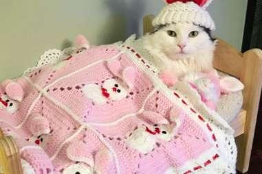 cat sleeps in doll bed