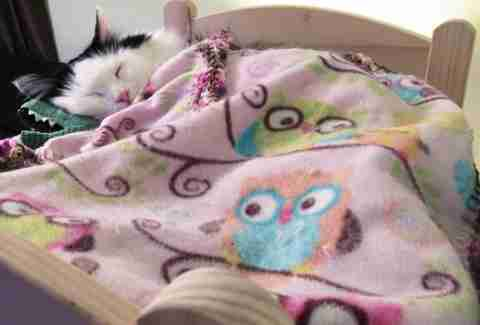 cat sleeps in doll bed