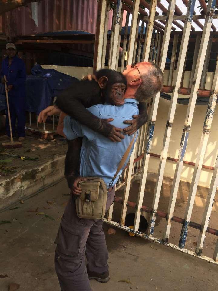 Rescued chimp hugging man