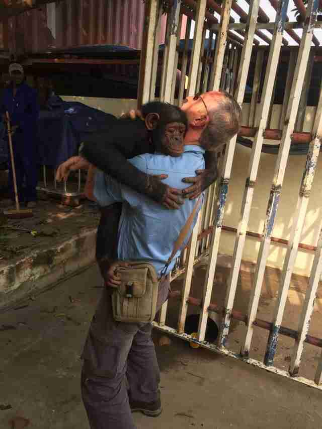 Rescued chimp hugging man