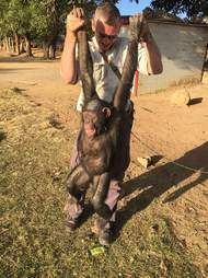 John Grobler with Leila the chimp