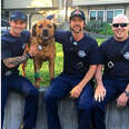 firefighters save dog