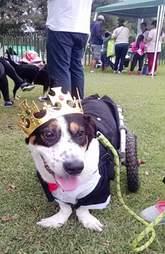Rescue dog wearing crown