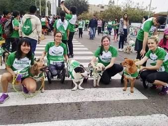 Rescue dogs in marathon