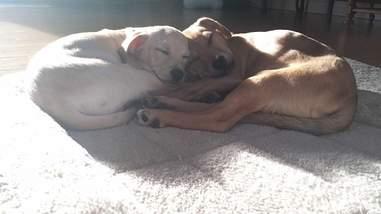 Dog siblings sleeping together