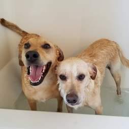 Dog siblings in a bath