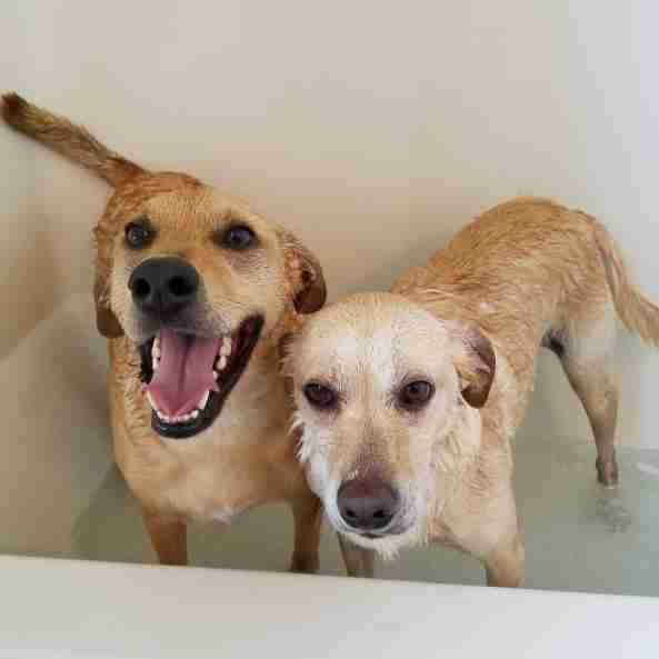 Dog siblings in a bath