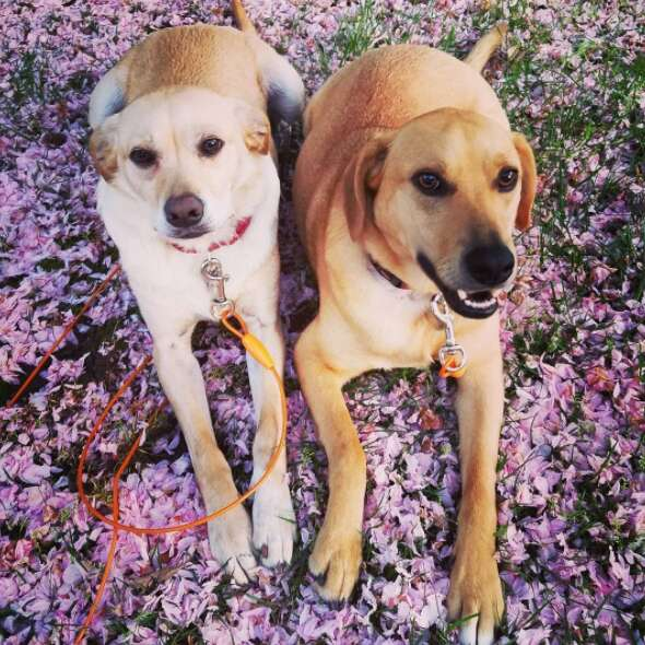 Dog siblings outside together