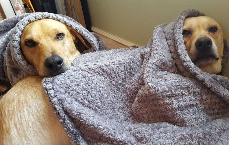 Dog siblings cuddling together