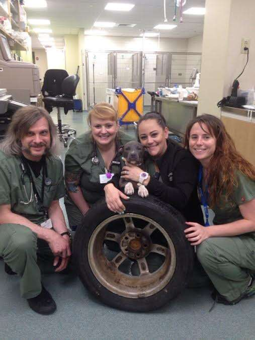 Vet team with puppy rescued from tire