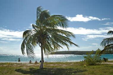 beach on vieques, Puerto Rico