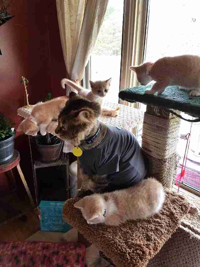 Rescue cat on tower with kittens