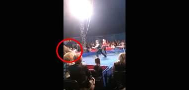 Ukraine circus bear lunging into audience