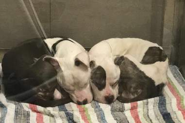 shelter dogs cuddle