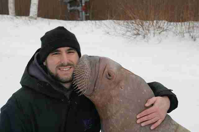 Phil Demers with Smooshi the walrus at Marineland